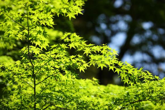 yun_63725B15D.jpg